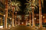 550px-SAN_JOSE_CALIFORNIA_PALM_TREE_2010